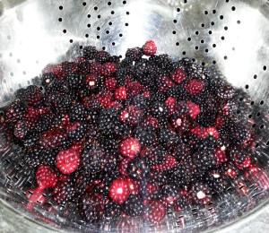 Blackberries - HDG Landscape Design
